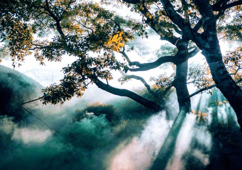 Licht Baum Lebensüberzeugung - Platon Kiriazidis
