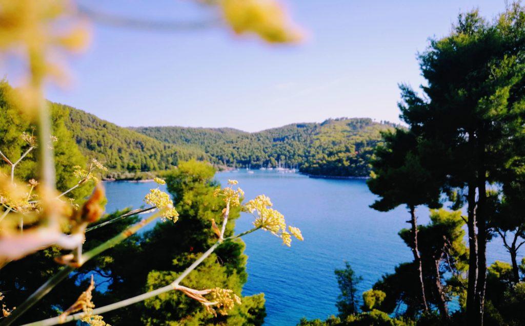 Westseite von Skopelos besticht durch seine dichten Pinienwäler und das satte Blau der Agäis, Entspannung pur